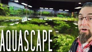 How To Aquascape A Freshwater Aquarium