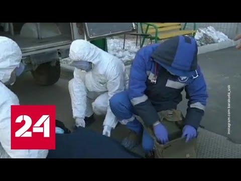 Нажиться на коронавирусе: предприниматели рассчитывают заработать большие деньги - Россия 24