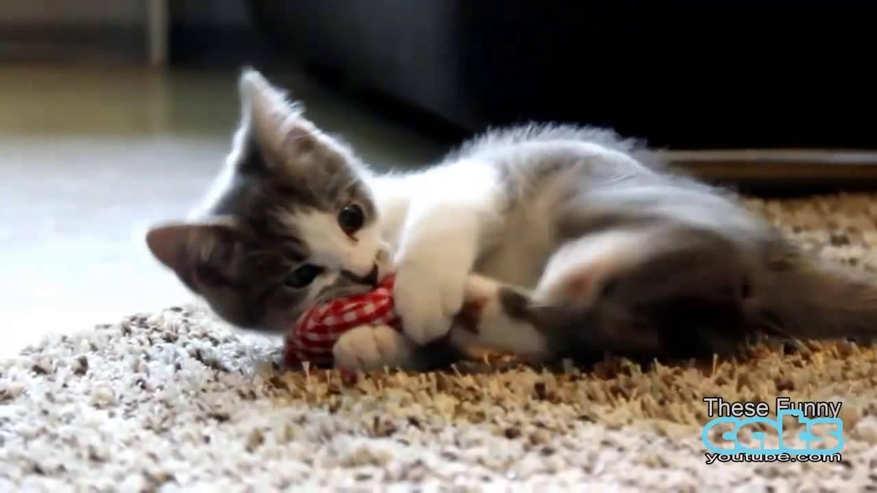 Nette lustige Katzchen und Musik Videos #2