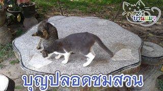 บ้านแมว  บุญปลอดชมสวน  cat-house: BoonPlod in the yard
