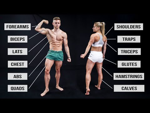 Hit Every Muscle in 30 Minutes (Full Body Workout Routine!) thumbnail