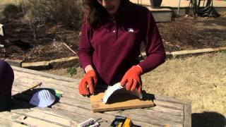 Building A Barn Swallow Nest (3/30/13)