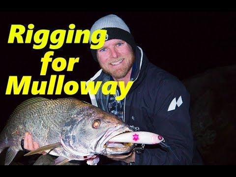 how to find mulloway jewels