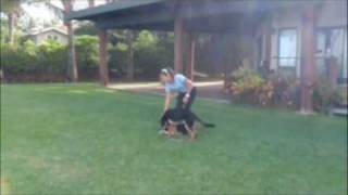 Sit Means Sit Dog Training Maui Hawaii Integrating Play And Obedience Skills