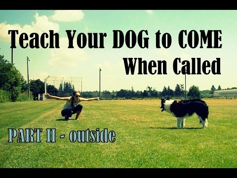 TRAINING Your DOG Come When Called - Listening Outside, Part 2