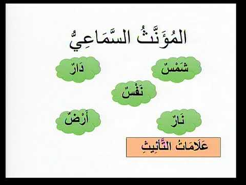 Arabic U1 L4 Grammar  Gender of nouns
