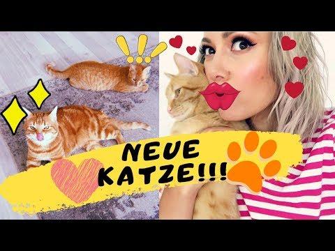 Zweite Katze Im Haus! Zusammenführung, Erste Tage Und Peaches Reaktion | Funnypilgrim