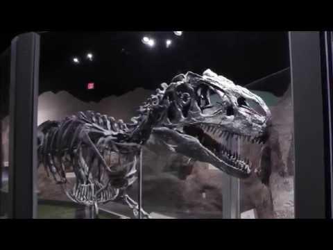 Cincinnati Museum Center, Part 2  Museum of Natural History & Science  HD