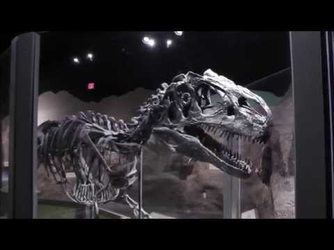 Cincinnati Museum Center, Part 2  Museum Of Natural History & Science  HD