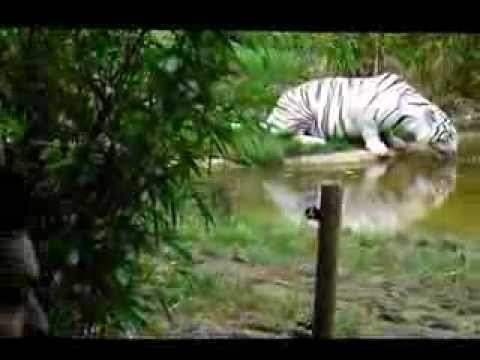 Weekend au zoo de la fl che dans la sumatra lodge youtube for Chambre zoo de la fleche