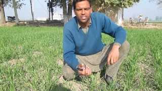 Interview with a Young Natural Farmer of Punjab