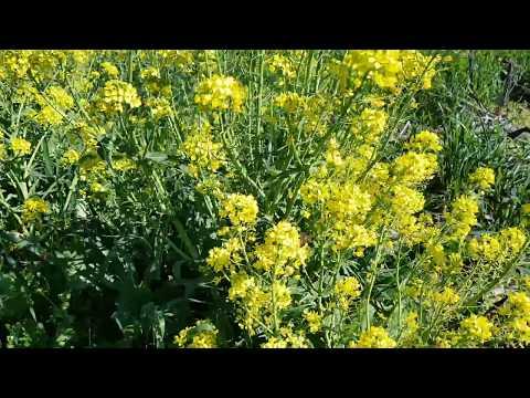 Alimentando Abelhas e  Insectos HD