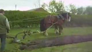 Horse Drawn Ploughing
