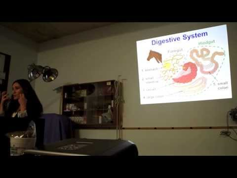 Equine Nutrition - Presented by Tacoma Equine & Purina Animal Nutrition