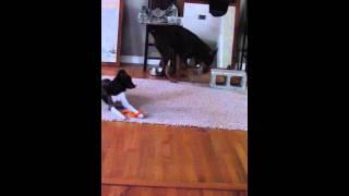 Orlando Dog Trainers Teach Dogs To Retrieve