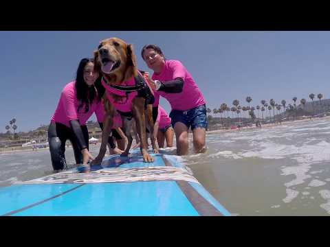 Surf Dog Ricochet Teaches Retired Marine How to Surf