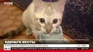 В Интернете появилось видео кота вора