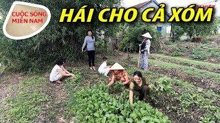 Cuộc sống nơi Cù Lao Long Hựu: tình làng nghĩa xóm #namviet