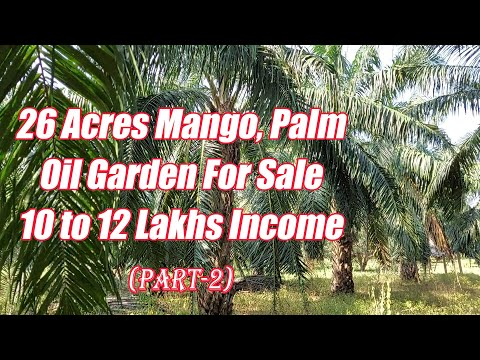 26 Acres Mango, Palm Oil Garden For Sale | Part-2, 16 Acres Palm Oil Garden | Just Rs. 30 Lakhs Acre