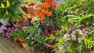 봄 베란다 새로 들인 화초와 이사중인 열대식물 소식/브…
