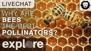 Why Bees Are The Best Pollinators? - Dr. Dino J. Martins Live Chat