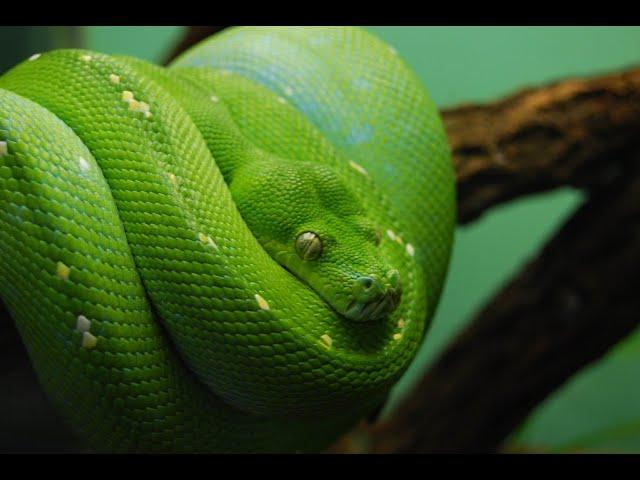 10 Deadliest Snakes on Earth