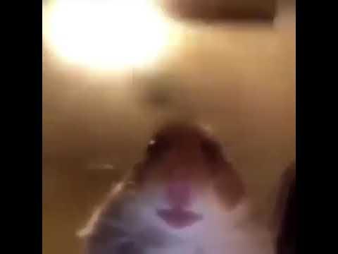 The Best Meme Ever Hamster Meme Youtube