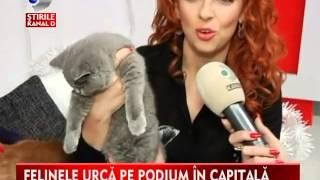 Kanal D - Sofisticat - Expozitie Internationala Felina de primavara 2015
