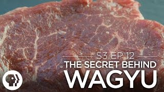 Original Fare - The Secret Behind Wagyu Beef | Original Fare | PBS Food
