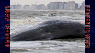 Video Washington WHALE WASH UP USA Feb. 2012: Prediction! download MP3, 3GP, MP4, WEBM, AVI, FLV Desember 2017