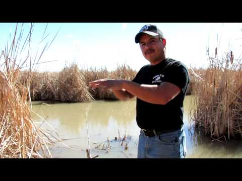 Bank Fishing Tip: How Catfish Bite In Rivers And Streams