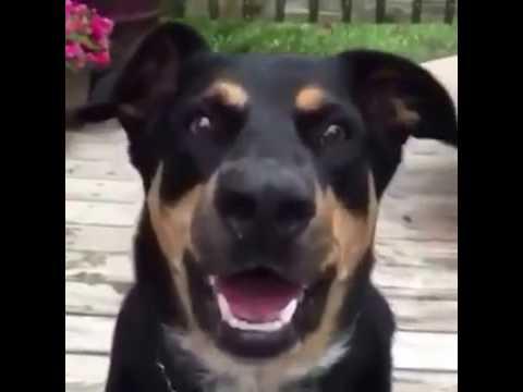 Funny Dog Bark Whisper