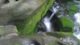 大隅半島の自然 滝 〔 滝の観音様 〕