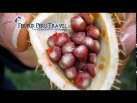 The flora of Iquitos - Iquitos Travel