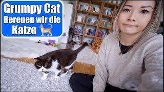 Bereuen wir die Katzen 🙈 War es die richtige Entscheidung? Grumpy Cat Trick beibringen | Mamiseelen