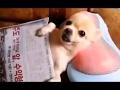 ailamalia  funny videos of funny animals new 2015
