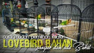 Download lagu CARA MUDAH MELIHAT MATERI LOVEBIRD BAHAN YANG KUALITAS DAN PROSES RAWATAN HARIAN