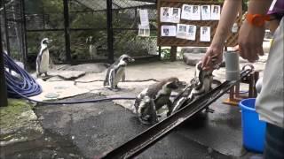 """小諸市動物園では8月の毎週土日 11時30分~11時45分で""""流しア..."""