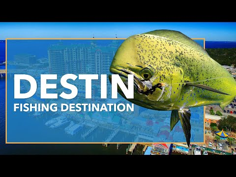 Fishing In Destin: All You Need To Know | FishingBooker