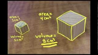 Small is Mighty: the Square-Cube Law