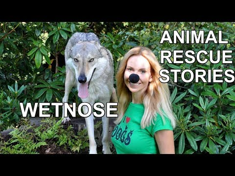 WETNOSE DAY ANIMAL RESCUE STORIES