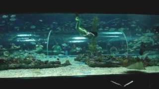 Mermaid Show at Manila Ocean Park