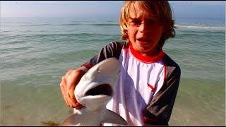 Catching Baby Lemon Sharks off of Florida Coast!