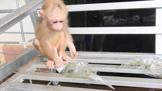 Favorite food - Monkey GON