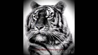 Смотреть эскизы для тату тигр