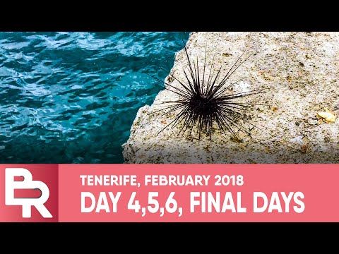Final Days Of Fishing @ Tenerife