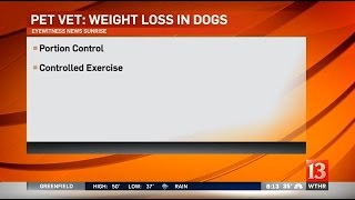 Pet Vet: Weight loss in dogs