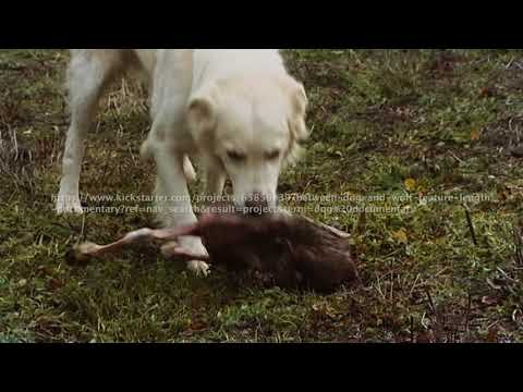 """Between Dog and Wolf  """"documentary trailer"""""""