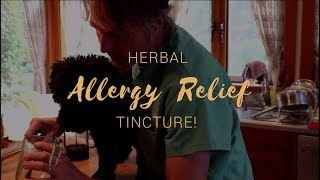 Best Herb For Dog Allergy