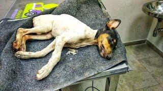 perrito-encontrado-dentro-de-un-contenedor-a-40º-c-bajo-el-sol-encuentra-una-nueva-vida